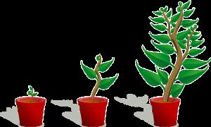 Groeicafe, broeikas voor ondernemers